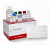 小鼠血纤蛋白原ELISA试剂盒